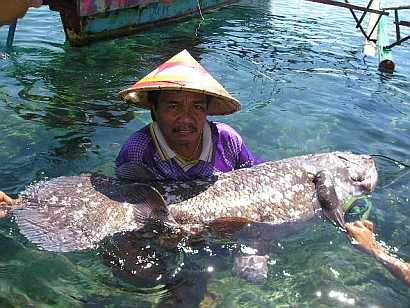 Coelacanth is a living sea fossil with legs. The 1.2 meter and 50 KG specimen caught by Indonesian fisherman Yustinus Lahama.