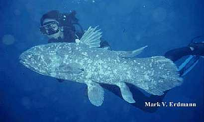 Coelacanth is a living sea fossil with legs.
